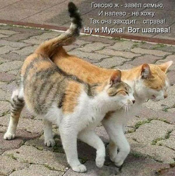 http://s4.uploads.ru/2lrjo.jpg