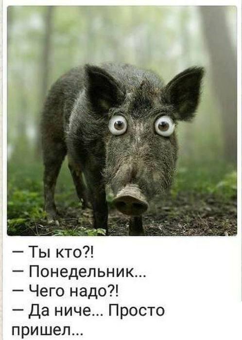 http://s4.uploads.ru/2qd19.jpg