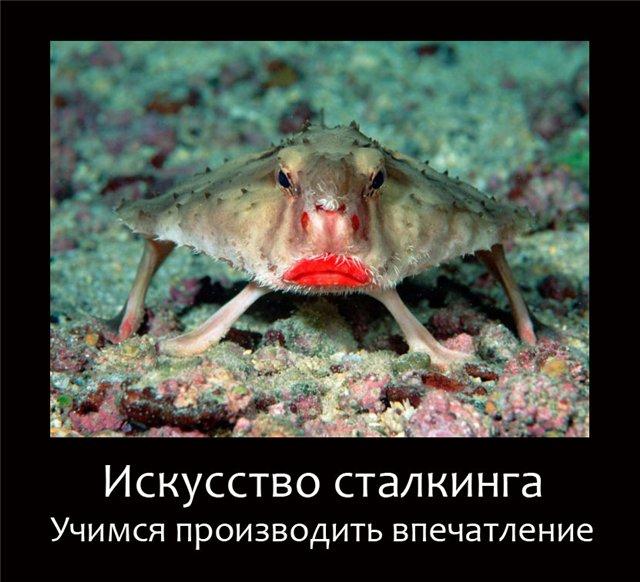 http://s4.uploads.ru/50rjK.jpg