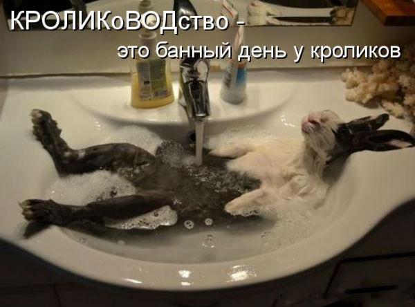 http://s4.uploads.ru/8HygR.jpg