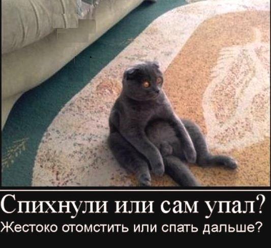 http://s4.uploads.ru/9h8Li.jpg