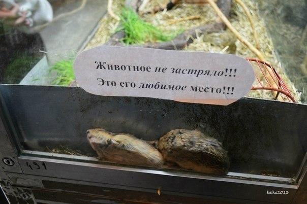 http://s4.uploads.ru/G3spE.jpg