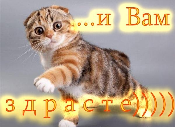 http://s4.uploads.ru/Gu31Y.jpg