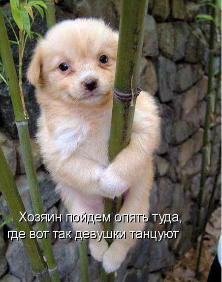 http://s4.uploads.ru/IN3sh.jpg