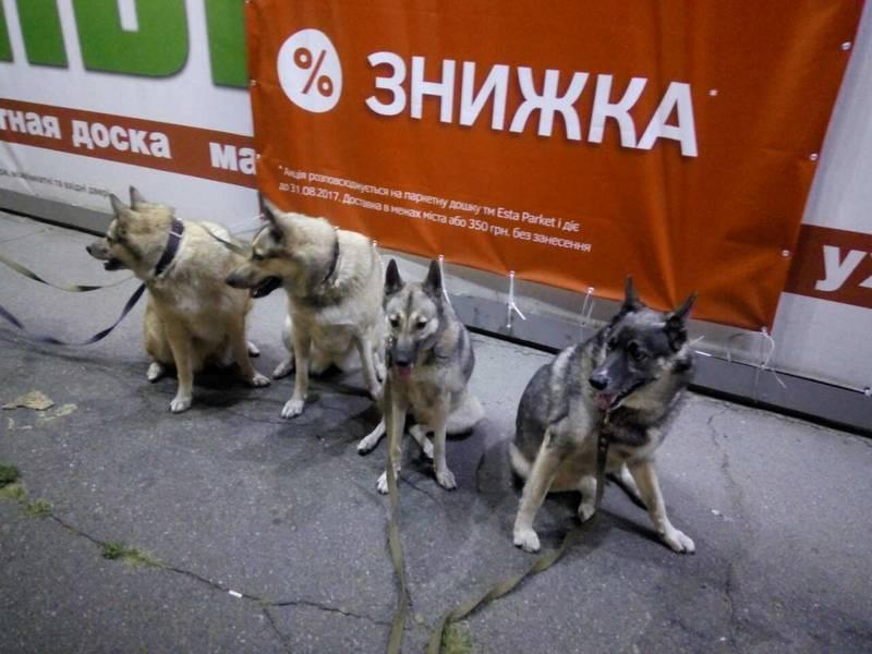 http://s4.uploads.ru/Ibun6.jpg