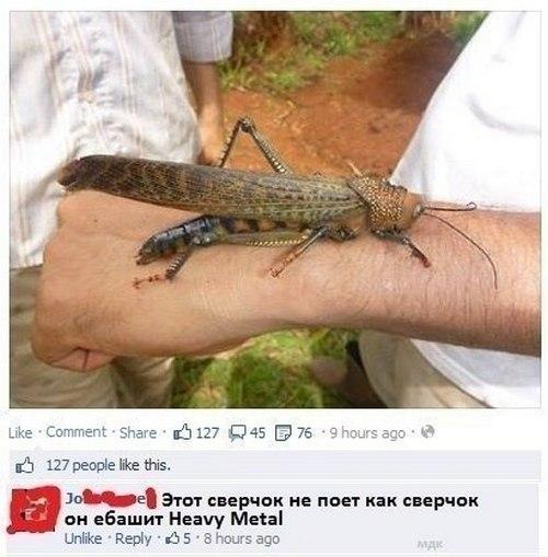 http://s4.uploads.ru/JdD4F.jpg