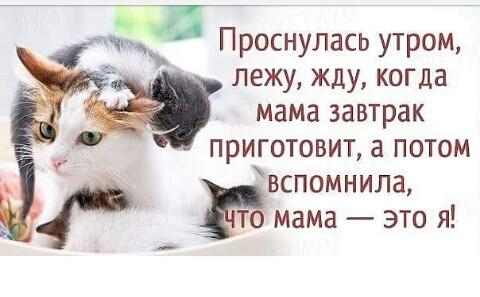 http://s4.uploads.ru/LU0bx.jpg