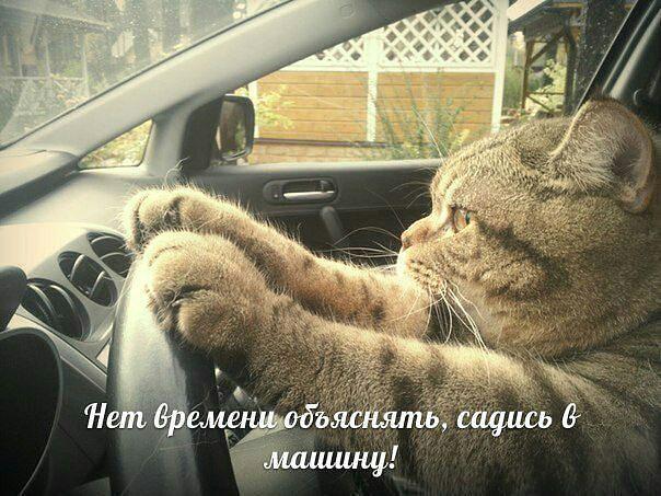 http://s4.uploads.ru/LZjqg.jpg