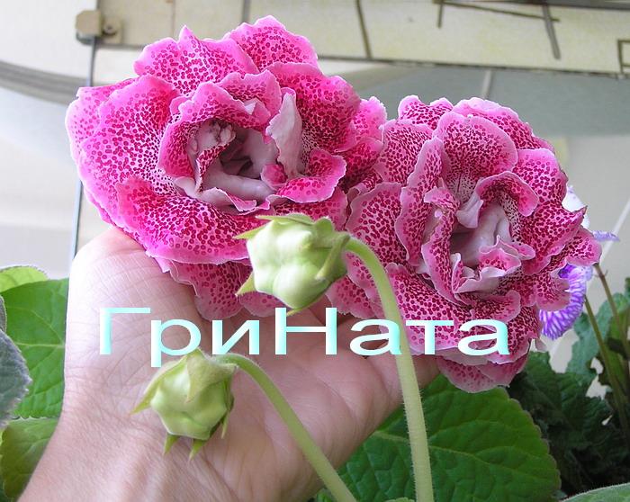 http://s4.uploads.ru/M0wVZ.jpg