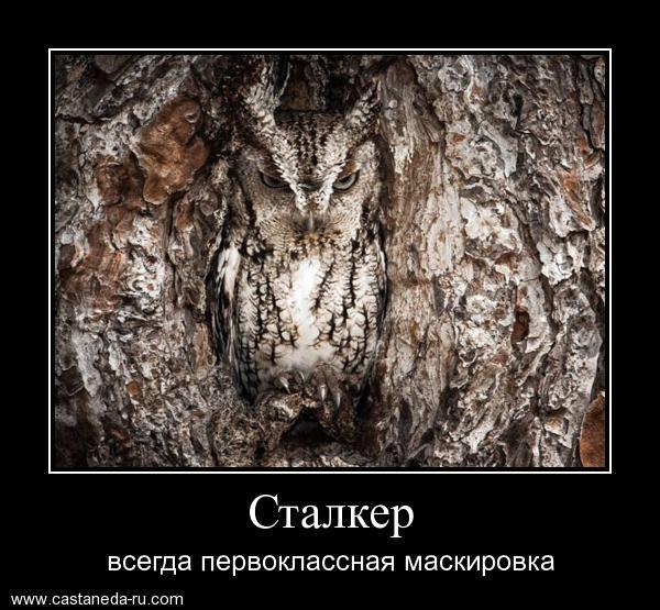 http://s4.uploads.ru/Ouet9.jpg