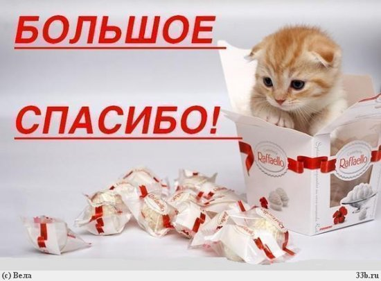 http://s4.uploads.ru/PgWuC.jpg