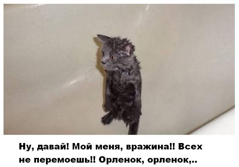 http://s4.uploads.ru/Q12FV.jpg