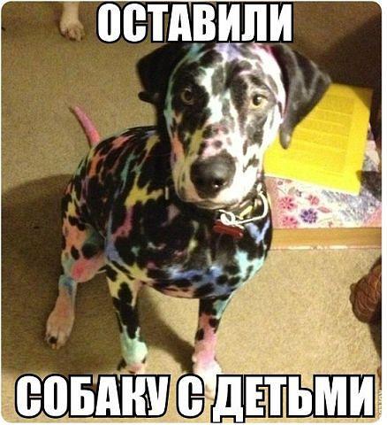 http://s4.uploads.ru/SiKhQ.jpg
