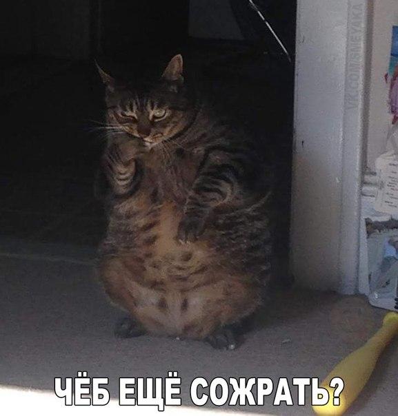 http://s4.uploads.ru/VJ90A.jpg