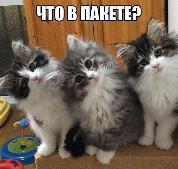 http://s4.uploads.ru/WBAdS.jpg