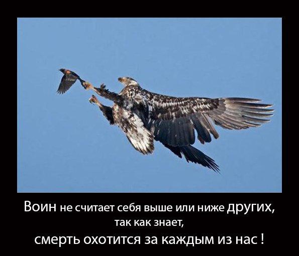 http://s4.uploads.ru/WkeQx.jpg