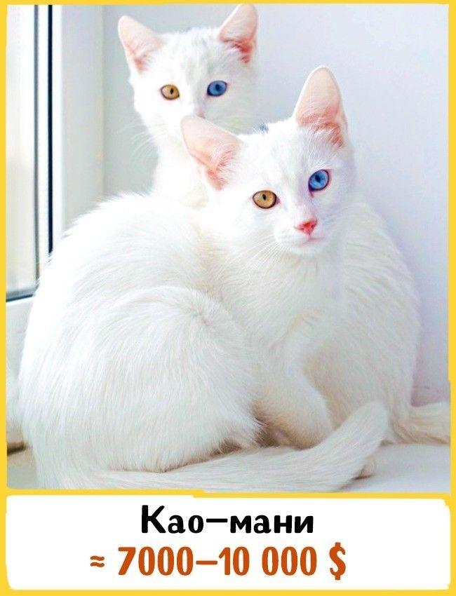 http://s4.uploads.ru/XkS0y.jpg