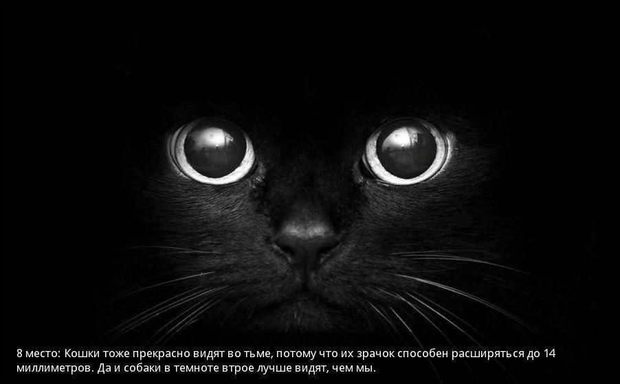 http://s4.uploads.ru/Xz3Gu.jpg