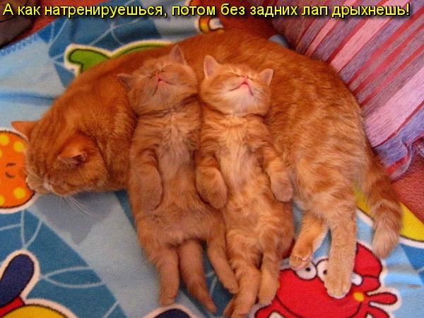 http://s4.uploads.ru/ZJAHY.jpg