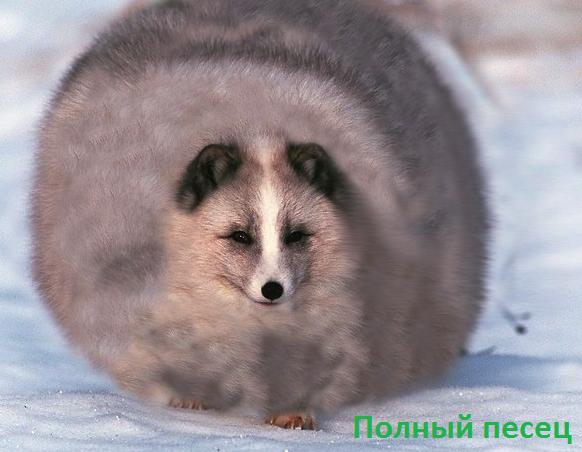 http://s4.uploads.ru/adQkx.png
