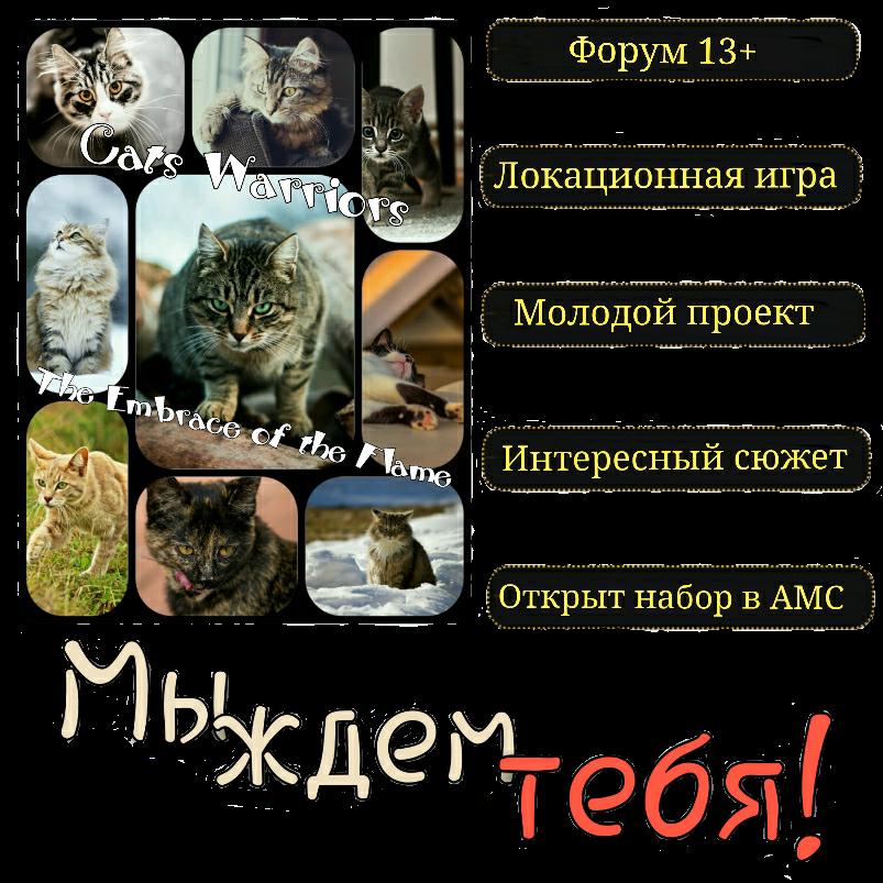 http://s4.uploads.ru/dEp1Q.png