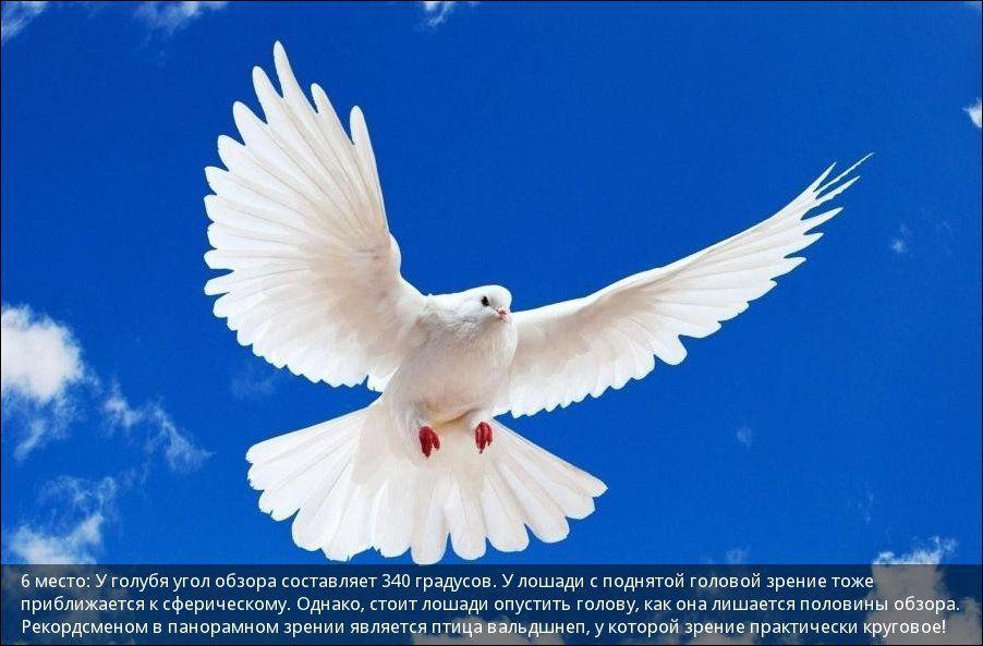 http://s4.uploads.ru/dutRQ.jpg