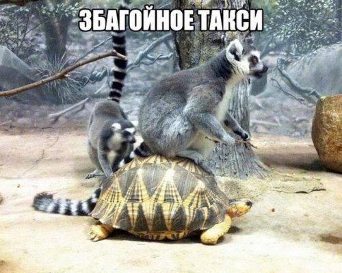 http://s4.uploads.ru/gRx3r.jpg