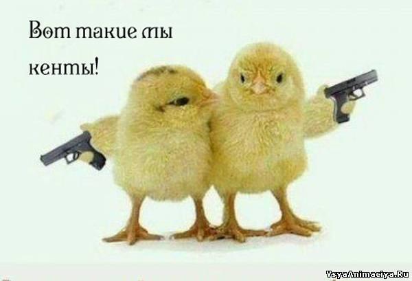 http://s4.uploads.ru/oICE1.jpg
