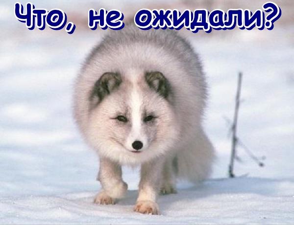 http://s4.uploads.ru/oRvHs.jpg