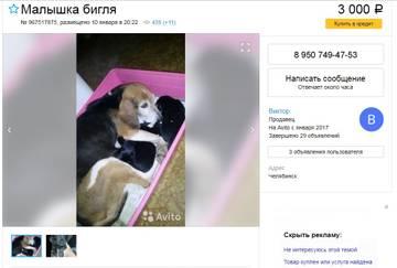 http://s4.uploads.ru/t/1c975.jpg