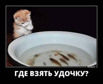 http://s4.uploads.ru/t/2cdkS.jpg