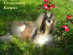 http://s4.uploads.ru/t/4HiVk.jpg