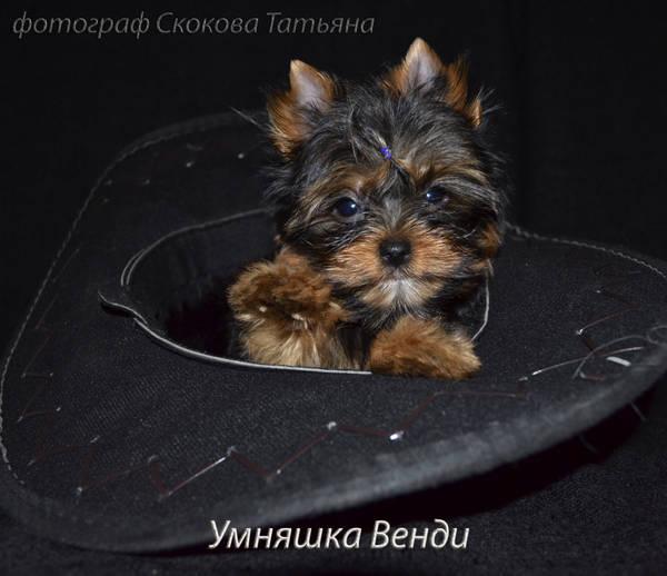 http://s4.uploads.ru/t/4L6g1.jpg