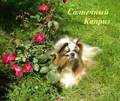 http://s4.uploads.ru/t/4MYj3.jpg