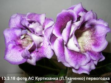 http://s4.uploads.ru/t/5HMye.jpg