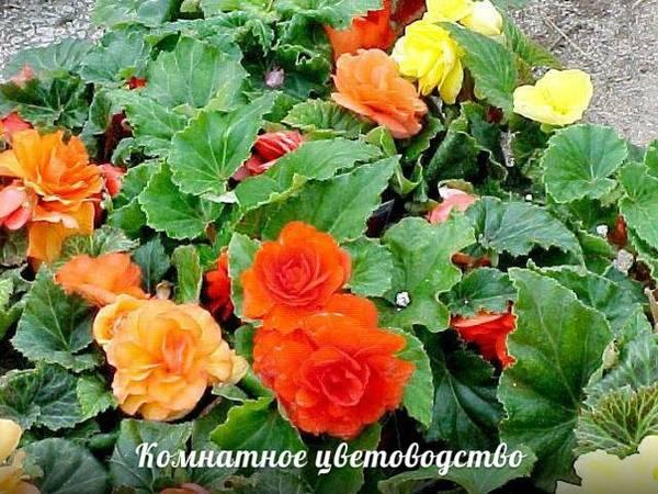 http://s4.uploads.ru/t/63hMi.jpg