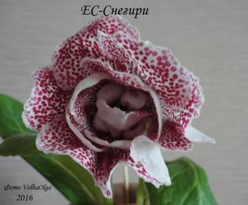 http://s4.uploads.ru/t/8BxYz.jpg
