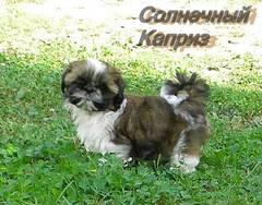 http://s4.uploads.ru/t/8Inyo.jpg