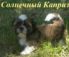 http://s4.uploads.ru/t/8Z5WP.jpg