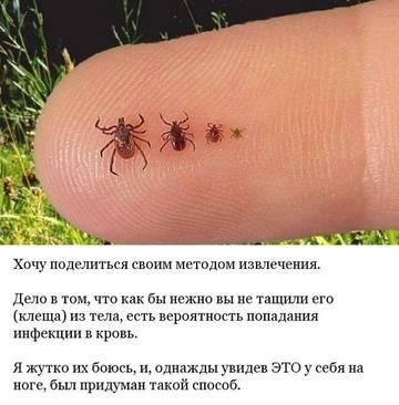 http://s4.uploads.ru/t/8h61s.jpg