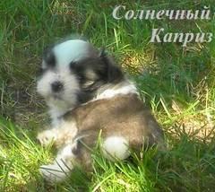 http://s4.uploads.ru/t/9Qc7w.jpg