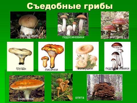 http://s4.uploads.ru/t/BXPQb.jpg