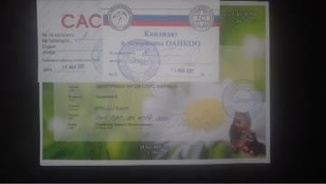 http://s4.uploads.ru/t/CSvQz.jpg