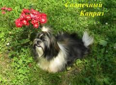 http://s4.uploads.ru/t/DKI0E.jpg