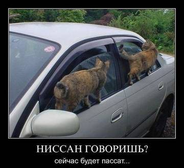 http://s4.uploads.ru/t/DnZwg.jpg