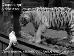 http://s4.uploads.ru/t/EDlfC.jpg