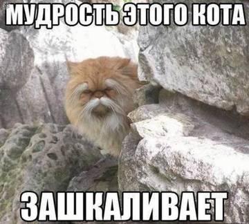 http://s4.uploads.ru/t/ESwIs.jpg