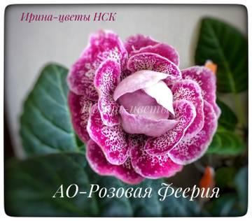 http://s4.uploads.ru/t/FRxf7.jpg