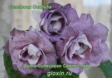 http://s4.uploads.ru/t/FVNxL.jpg