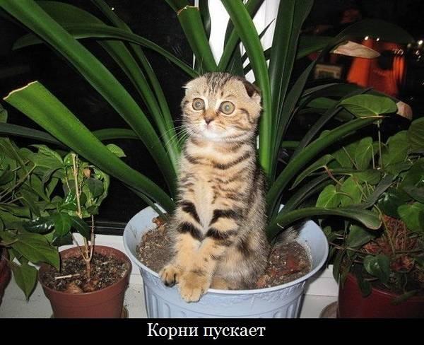 http://s4.uploads.ru/t/FbDvz.jpg
